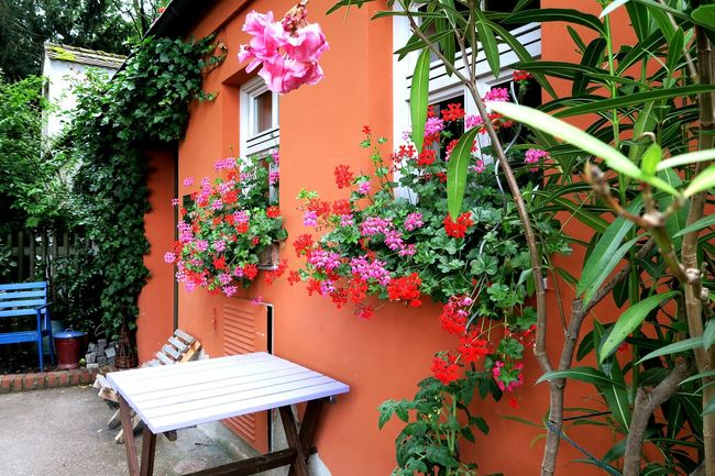 Home Orange Flower Flowers Door Window Suburban Suburbia Windows Window House Building Colors Colorful Home Is Where The Art Is Color Of Life