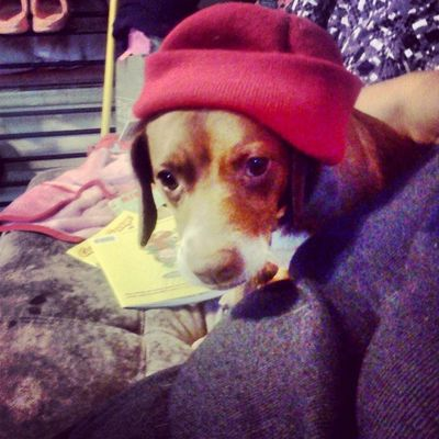 My dog wears Beanies better than you...