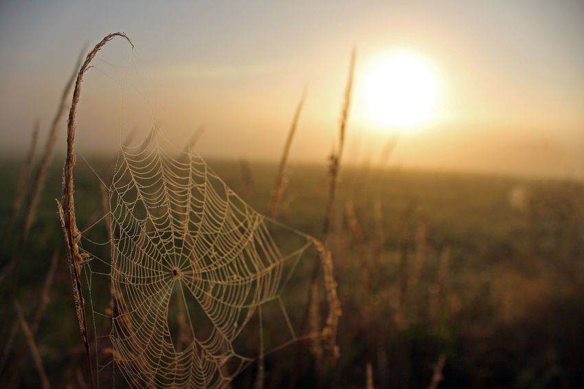 EyeEm Nature Lover Nature Sunlight Beauty In Nature Canon Canonphotography Close-up Day Field Focus On Foreground Freshness Growth Nature Nature_collection No People Outdoors Plant Sky Spider Web Sun Sunlight Sunrise Sunrise_sunsets_aroundworld Sunset Tranquility