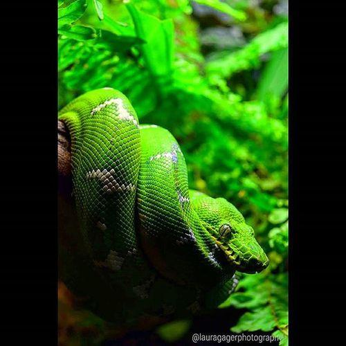 Nikonshots AspiringPhotographer Nikonphotography Nikon Nikon_photography_ Nature Baltimoreaquarium Snake