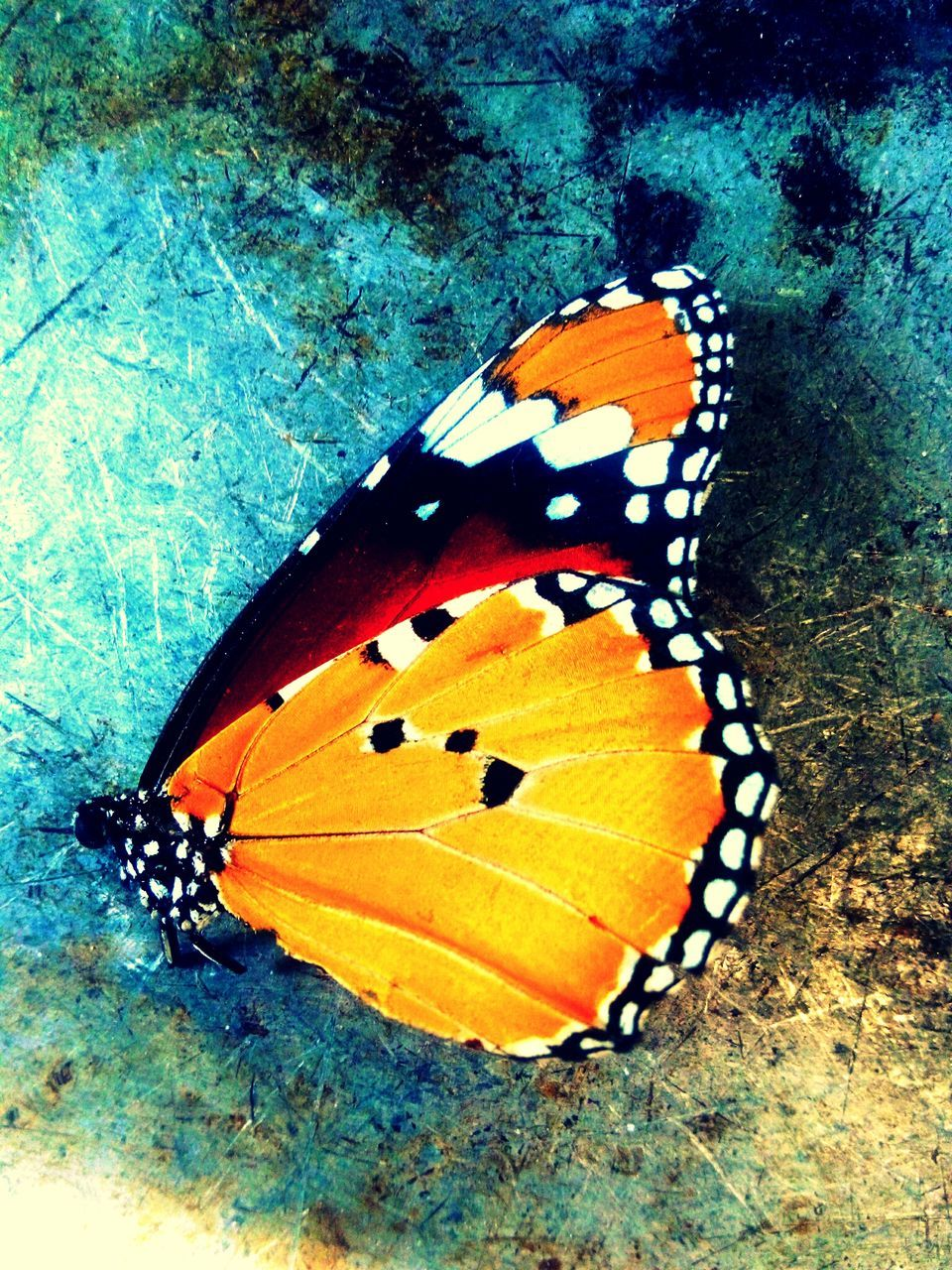 Butterfly On Wall