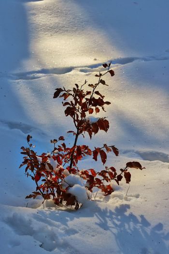 The beginning of life. Tree Beauty In Nature Outdoors Day Winter Snow Cold Temperature Sunlight Silhouette Canon760D Ice White Beginning Life Lonley Atmosphere Of Peace
