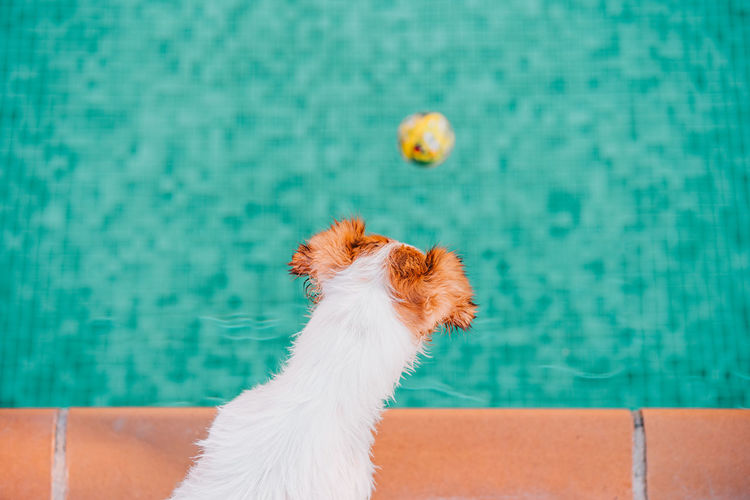 Close-up of dog against swimming pool