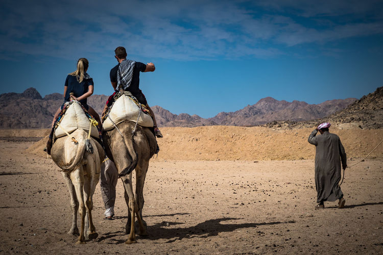 People with camels walking on desert