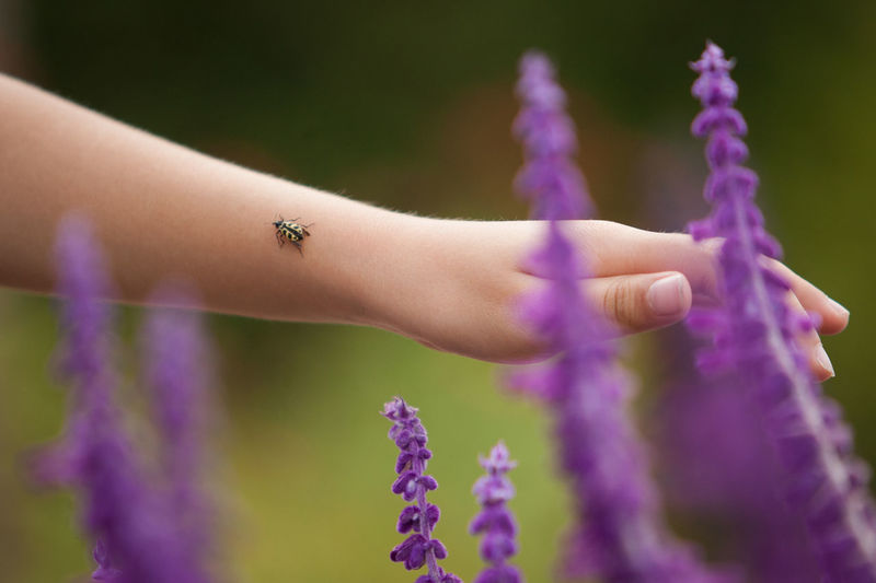 Cropped Image Of Hand Touching Lavender