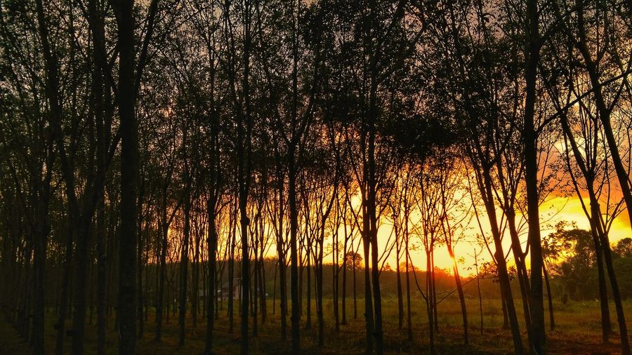 sunset in the woods. Sunset Wood - Material Sunsetinthewoods Wood Silhouette No People Forest