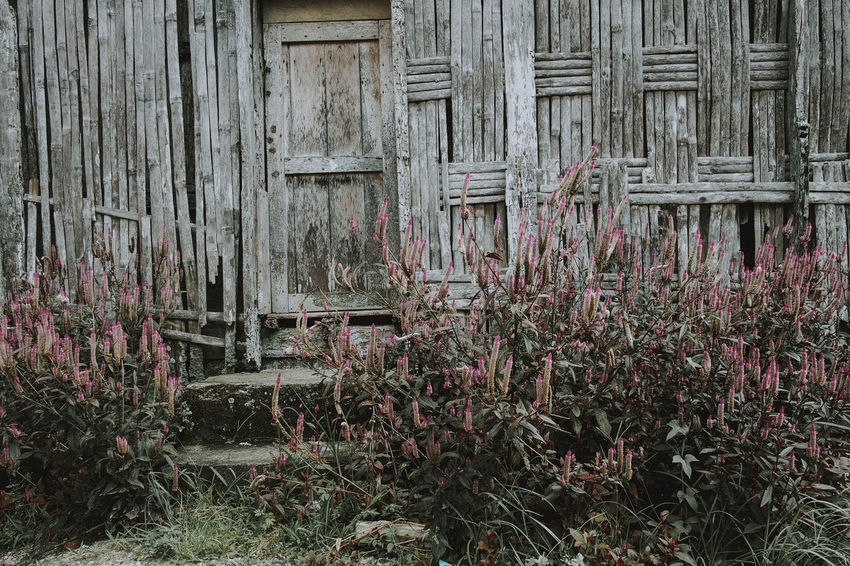 Nagari Tuo Pariangan, 2018 Architecture Built Structure Plant Wood - Material Building Exterior Day Building No People Flower Nature Flowering Plant Growth House Outdoors Old Beauty In Nature Weathered Abandoned Fragility Vulnerability  Purple Autumn Mood