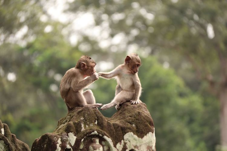 Monkeys wedding day Primate Animal Wildlife Mammal Animals In The Wild Vertebrate Group Of Animals Focus On Foreground Nature Animal Family