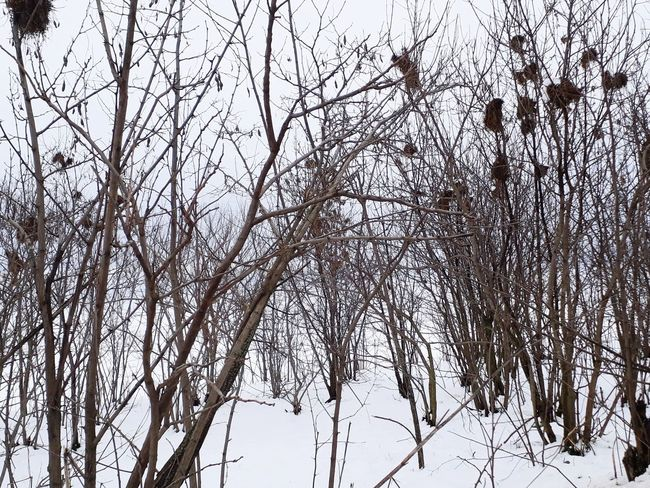 Cold Temperature Winter Snow Tree Nature Branch Low Angle View