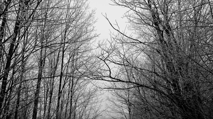 All I see is black and white Tree Nature Sky No People Beauty In Nature Low Angle View Outdoors EyeEmBestPics EyeEmNewHere Minimalism Enjoying Life First Eyeem Photo Photo By Me Beauty In Nature Clear Sky Nature Happiness Trees Close-up Snowing Forest Green Blackandwhite Photography Beauty Isitgood