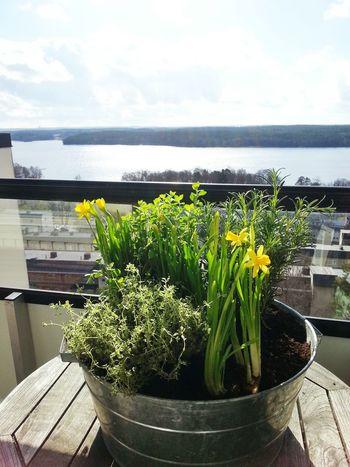 Balkongodling Balcony Spring Enjoying Life Äntligen :)