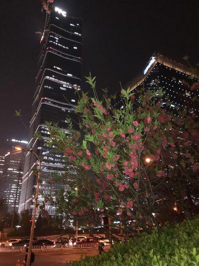Urban beauty Beijinglife BEIJING 北京 BEIJING北京CHINA中国BEAUTY Built Structure Plant City Nature Building Tower