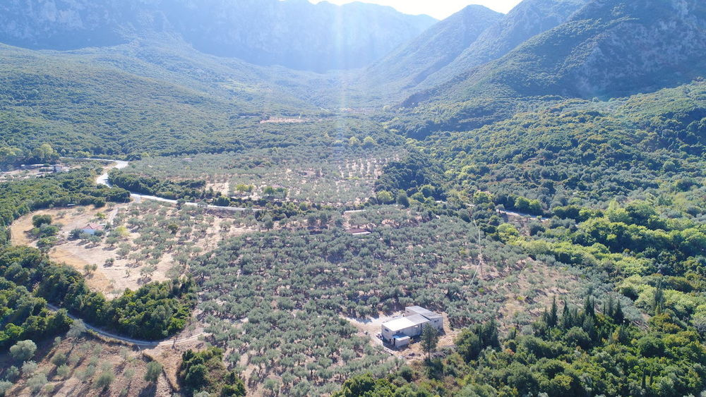 Olive Aerial View Agriculture Architecture Beauty In Nature Building Exterior Built Structure Day High Angle View Landscape Mountain Nature No People Olive Trees Outdoors Scenics Tree