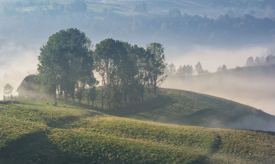 Grass Green Color Misty Morning Rural Sunny Weather Beauty In Nature Clouds And Sky Countryside Environment Fog Foggy Forest Hill Landscape Meadow Mountain Nature Old House Outdoors Scenics - Nature Summer Tranquility Travel Destinations