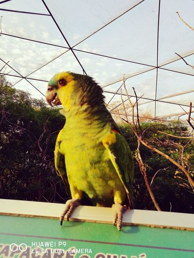 One Animal Bird Animal Themes Animals In The Wild Animals In Captivity Parrot Domestic Animals Nature Birdcage Animal Wildlife Pets Green Color Animal Representation Beauty In Nature