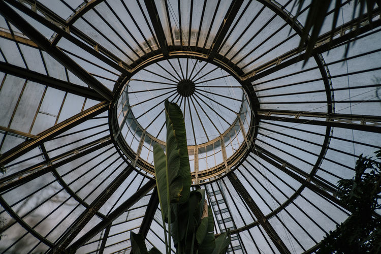 Hortus Botanicus Built Structure Low Angle View Architecture Sky Pattern Glass - Material Full Frame No People Dome Indoors  Skylight Day Nature Ceiling Sunlight Shape Design Geometric Shape Directly Below Modern Cupola
