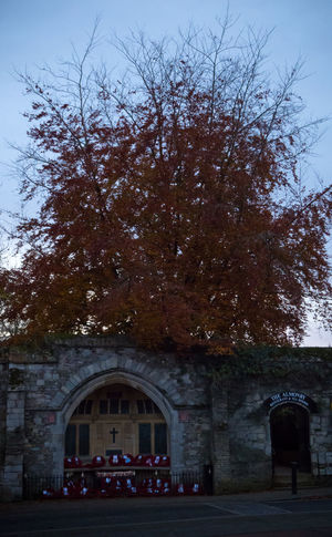 Afternoon by Ely Cathedral 2 Ely Ely Cathedral Architecture Building Exterior Built Structure Changing Color Of Leaves Day Leaves 🍁 Nature No People Outdoors Sky Tree