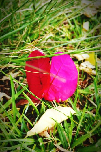 Fallen Leaves still Catching by FeBird - make it Simple but Significant at Every Moment in your life.