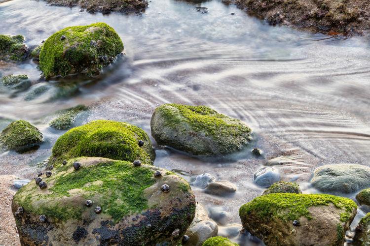 Moss growing on rocks by sea