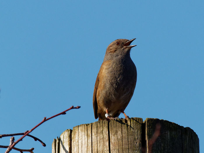 Low angle view of bird perching on wooden post against sky