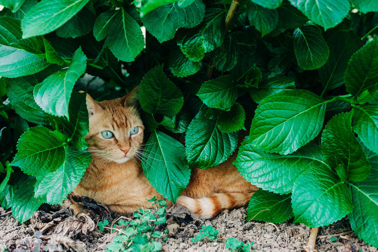 Portrait of cat on leaves