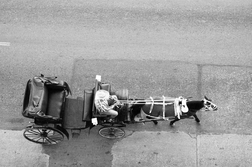 Transportation Outdoors High Angle View Day No People Animal Themes Mammal Havanna, Cuba Travel Destinations Cuba Havana Retro Styled Mode Of Transport City Life One Man Only One Person City Only Men People Men Adult Road Street Transportation