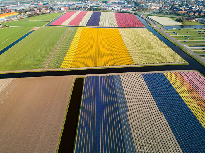 Hyacinth Narcissus Flowers High Angle View Day Multi Colored Nature No People Outdoors Yellow Transportation Pattern Striped Field Architecture Sunlight Landscape Agriculture Sport Land Plant Mode Of Transportation Rural Scene
