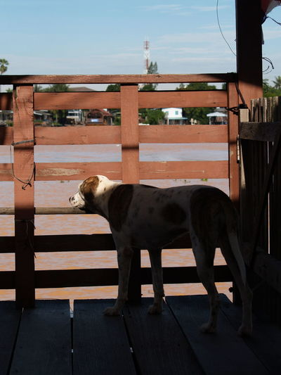 Side view of dog standing against railing