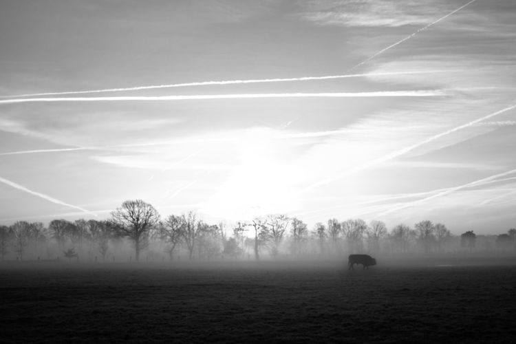 Black and white countryside winter landscape Beauty In Nature Cloud - Sky Day Environment Field Fog Hazy  Idyllic Land Landscape Nature No People Non-urban Scene Outdoors Plant Scenics - Nature Silhouette Sky Tranquil Scene Tranquility Tree Vapor Trail