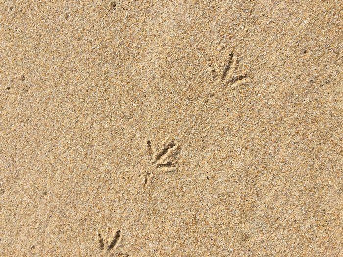 Foot Steps Sand