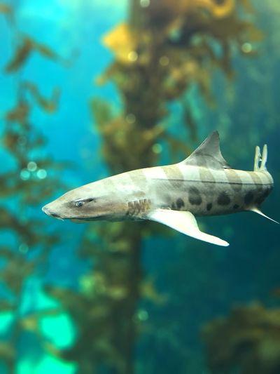 Underwater Aquarium Animal Themes Shark