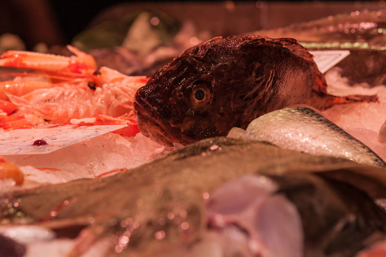 Raw Seafood Fish Food Food And Drink Animal Dead Eyes For Sale Close-up Freshness Raw Food Vertebrate Fish Market Wellbeing Consumerism Healthy Eating Fishing Industry Market Boqueria  Icy