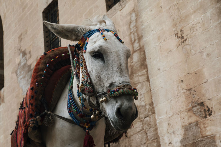 Low angle view of donkey standing by wall