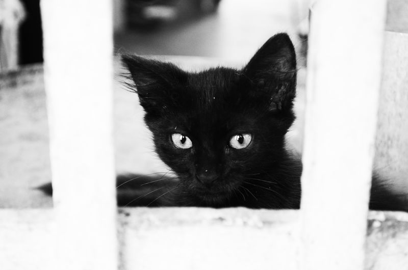 Pets Domestic Cat Domestic Animals Animal Themes Mammal Close-up Feline Black Color One Animal No People Portrait Watching Indoors  Day Cats Lovers  Cats Cats 🐱 Feline Portraits Cats Lovers  Cat♡ Cat Lovers Cats Of EyeEm