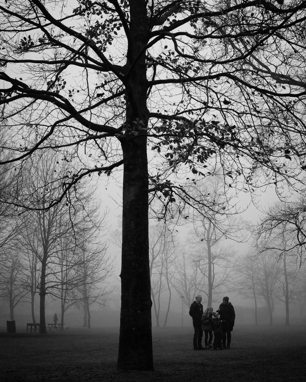 tree, bare tree, real people, men, branch, nature, leisure activity, togetherness, winter, fog, lifestyles, field, tree trunk, landscape, walking, beauty in nature, women, growth, outdoors, silhouette, tranquility, two people, cold temperature, scenics, day, friendship, warm clothing, mammal, sky, people
