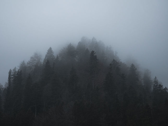 Silhouette Of Trees In Foggy Weather