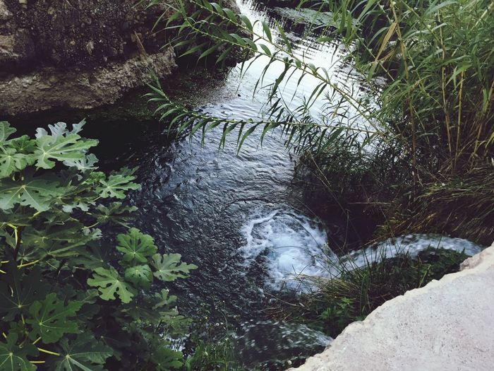 Water Nature Plant Outdoors Growth Day Green Color Leaf Tree Tranquility No People Scenics Forest Stream - Flowing Water Beauty In Nature Close-up