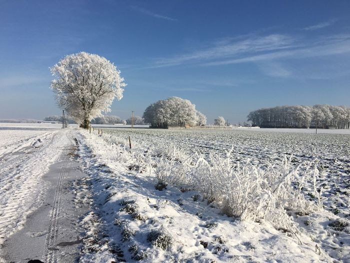 Frozen Trees On Snow Covered Field Against Sky During Winter