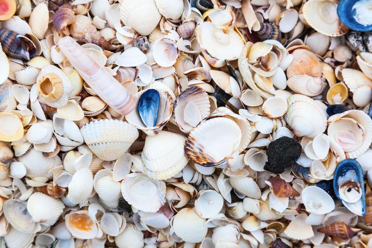 Seashells on a beach by the sea