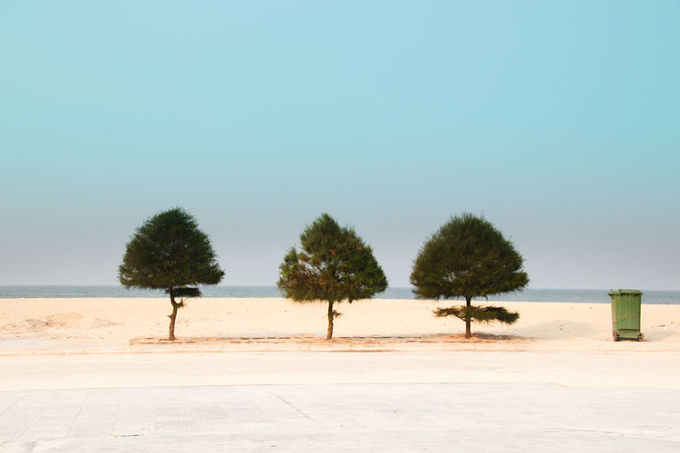 Trees at shore of beach against clear sky