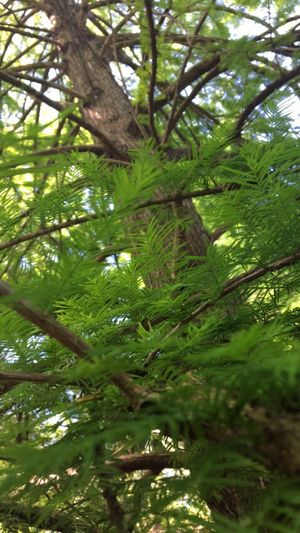 Perspective Low Angle View Growth Tree Greenery Close-up Botanical Garden Full Of Life