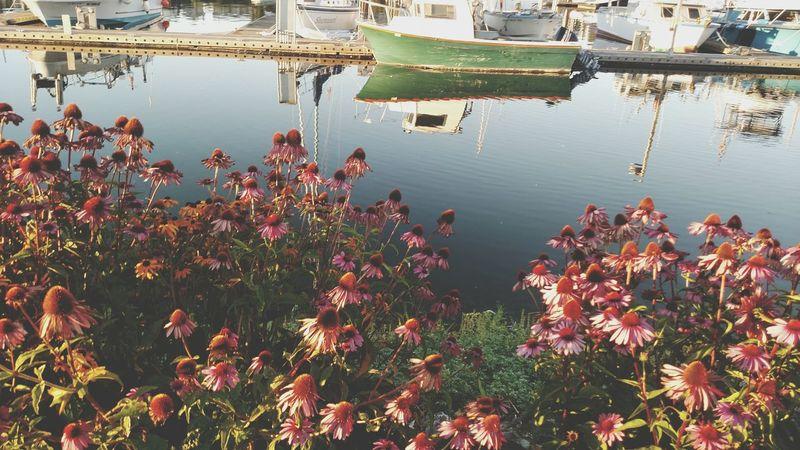 Oldboat Boats⛵️ Flowerporn 🌷 Flowers 🌹 Flowerpower🌸 Flowerpower Flowers