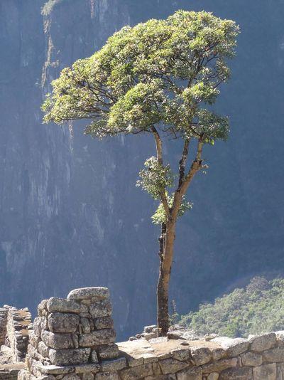 Tree Macht