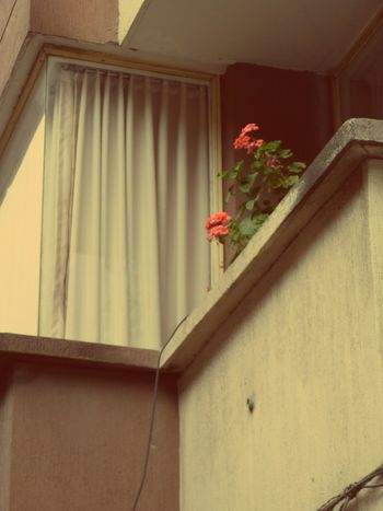 Flower. Photooftheday Photo Flower Town Photography Balcony