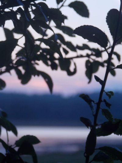 Water Horizon Over Water Branch Tranquil Scene Scenics Leaf Tree Beauty In Nature Nature Growth Sky (null)Calm Remote Seascape Solitude Focus On Foreground Shepherd's Delight Pink Sky Rutland Water Reservoir