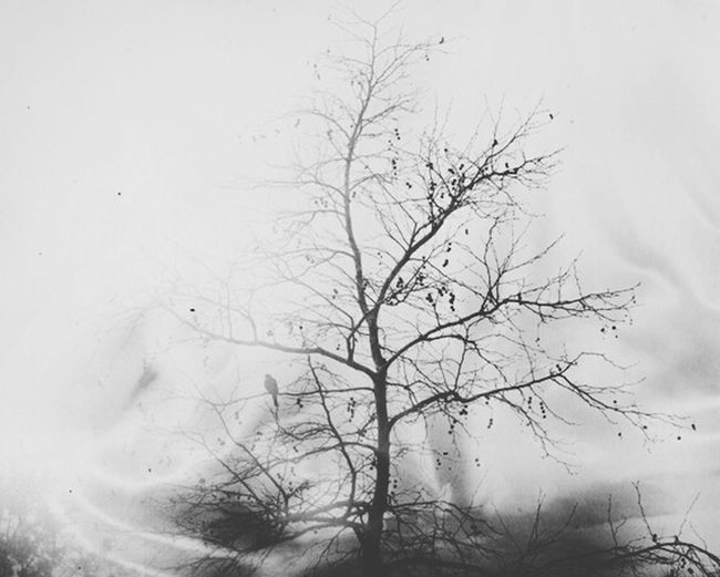 Winter. Tree Winter Birds Landscape Moody Nature Stormy Weather Blackandwhite Cold The Week On EyeEm