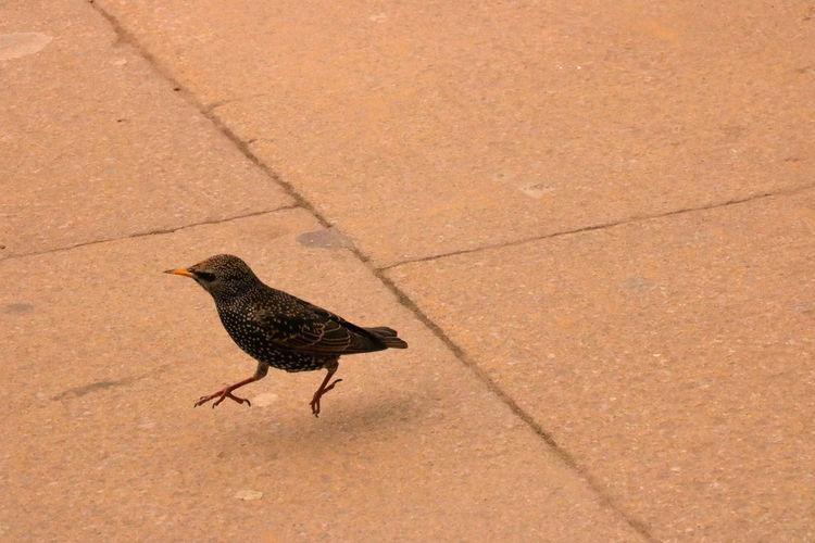 Close-up of bird on ground