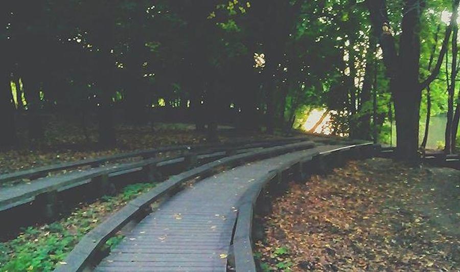 Дорога в жизнь Green Nature Road Lake Sun L4l T4l Minsk Minskgram Tvoyminsk Vscocam Belarusgram Belarusinsta Vscobe