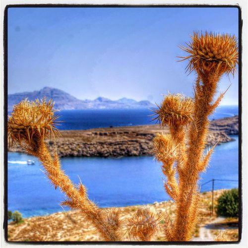 Греция родос остров чертополох небомореоблака лето Greece Rhodes Lindos Skyseacloudes Island Thistle HDR