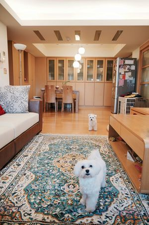 Sweet Home Interior Home Design Designer  Pets Maltese Love Family Lifestyles Life Space Way To Go Home Somewhere See What I See Nice Day Beautiful Design Element Nice View Happy Animal Themes